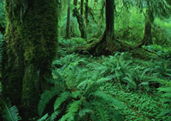 Creation - Rainforest