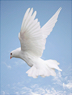 Pentecost: A dove flying